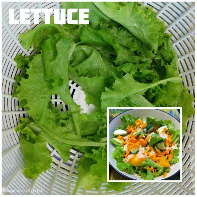 lettuce, for the love of food, organic, garden